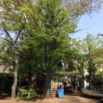初夏の園庭