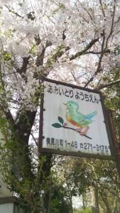 2016大門前桜